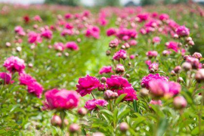 fleurs commune loire authion